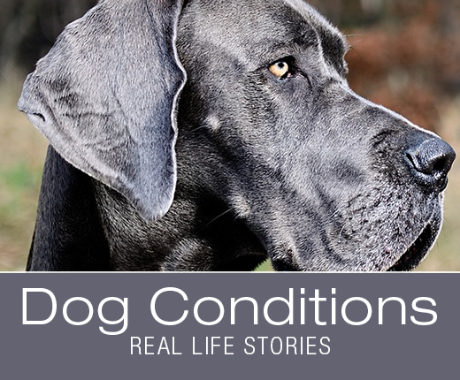 Dog Conditions - Real-Life Stories: How Obscure Is Babesiosis Really? Mika's Story