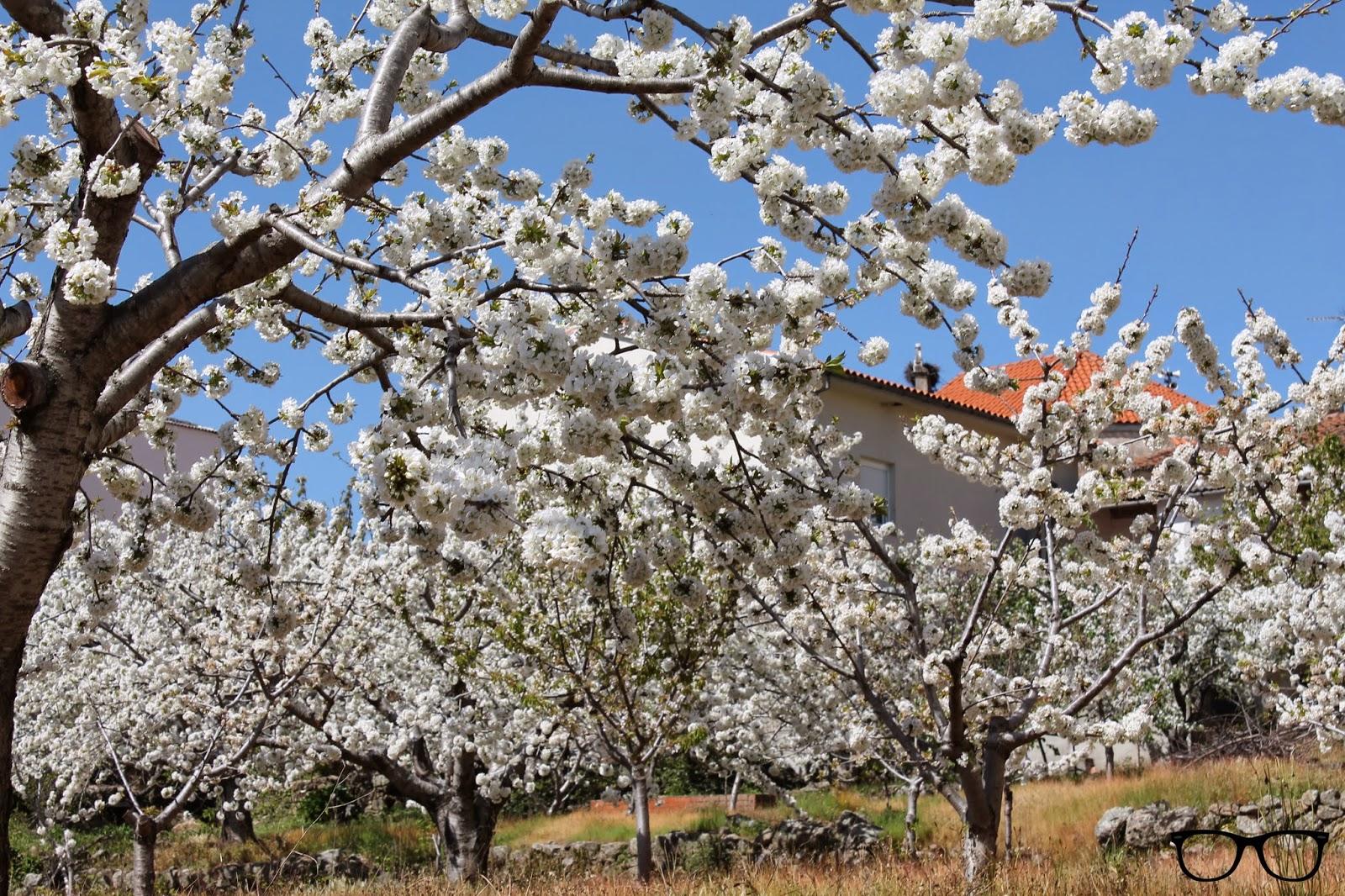 Flores Valle de Jerte