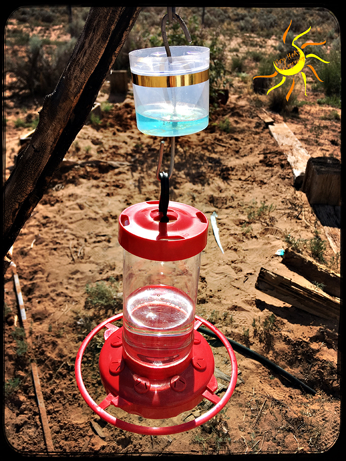 simplicity journal the best way to keep ants out of hummingbird feeders diy ant cups. Black Bedroom Furniture Sets. Home Design Ideas