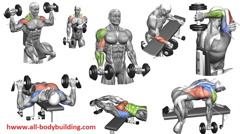 Beginning Dumbbell Workout - Easy Exercises to Get Started
