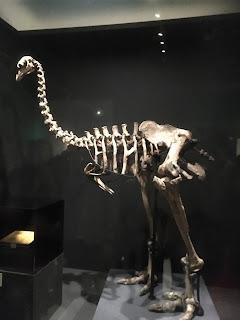 大英自然史博物館展③