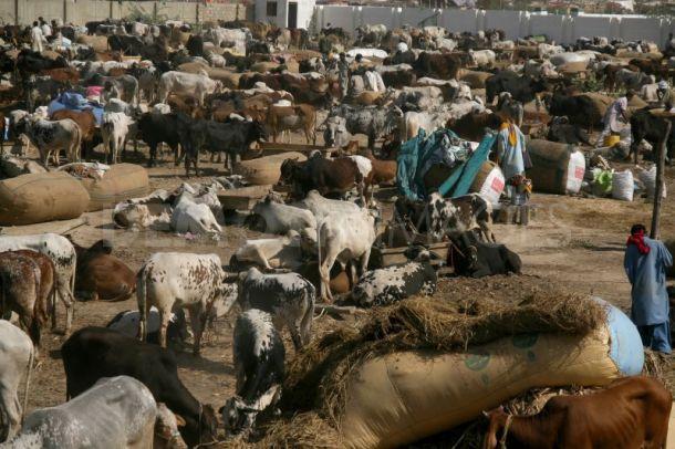 Islamic Reasoning | Animal rights and Eid ul Adha | Iftikhar Islam