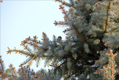 птичка на ели