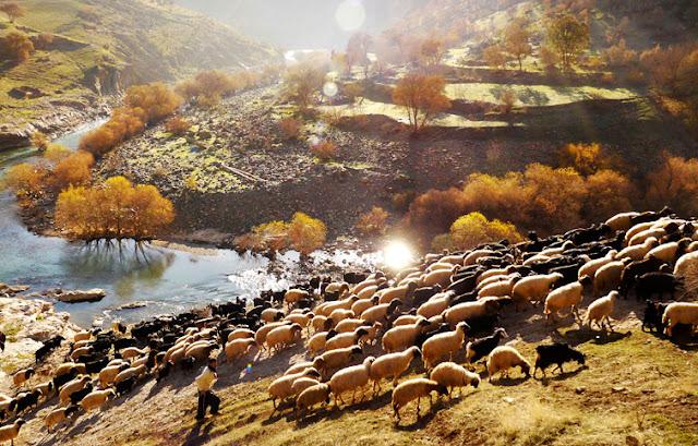 Les nomades de Kurdistan