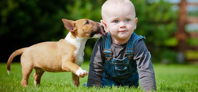 Συμβουλές για να παίζουν με ασφάλεια παιδιά και σκύλοι