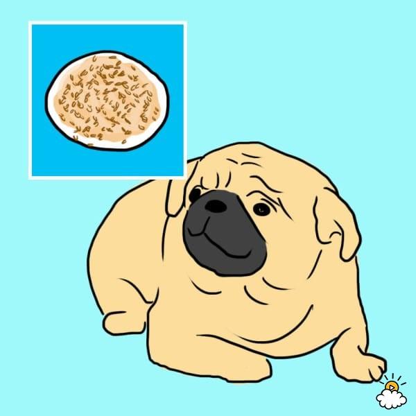 10 ανθρώπινες τροφές που κάνει να δίνετε και με το παραπάνω στον σκύλο σας!  (Φώτο)