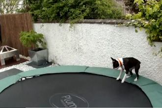 This Dog Just Can't Get Enough Of Jumping