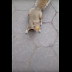 See why these squirrels would prefer not to be shot, the reason is surprising