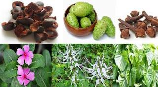 Diabetes atau kencing manis ialah salah satu penyakit kronis yang mempunyai angka pend 18 tumbuhan obat untuk atasi diabetes