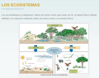 https://primaria3naranjos.wordpress.com/category/ciencias-naturales-y-sociales/4-los-ecosistemas/