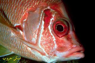 فوائد أكل السمك The benefits of eating fish
