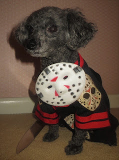 Toy Poodle As Jason