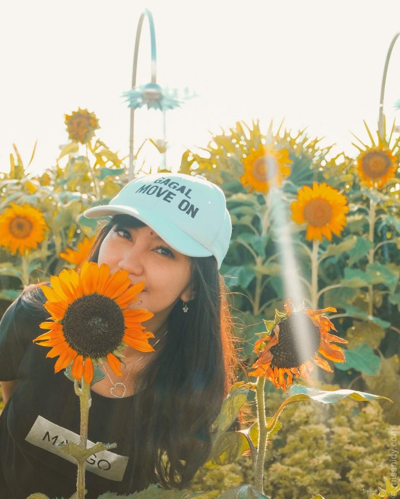 taman bunga matahari di singapura
