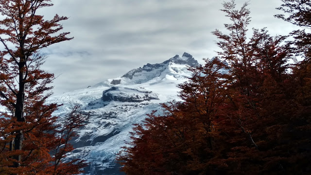Mount Tronador through the red leaves