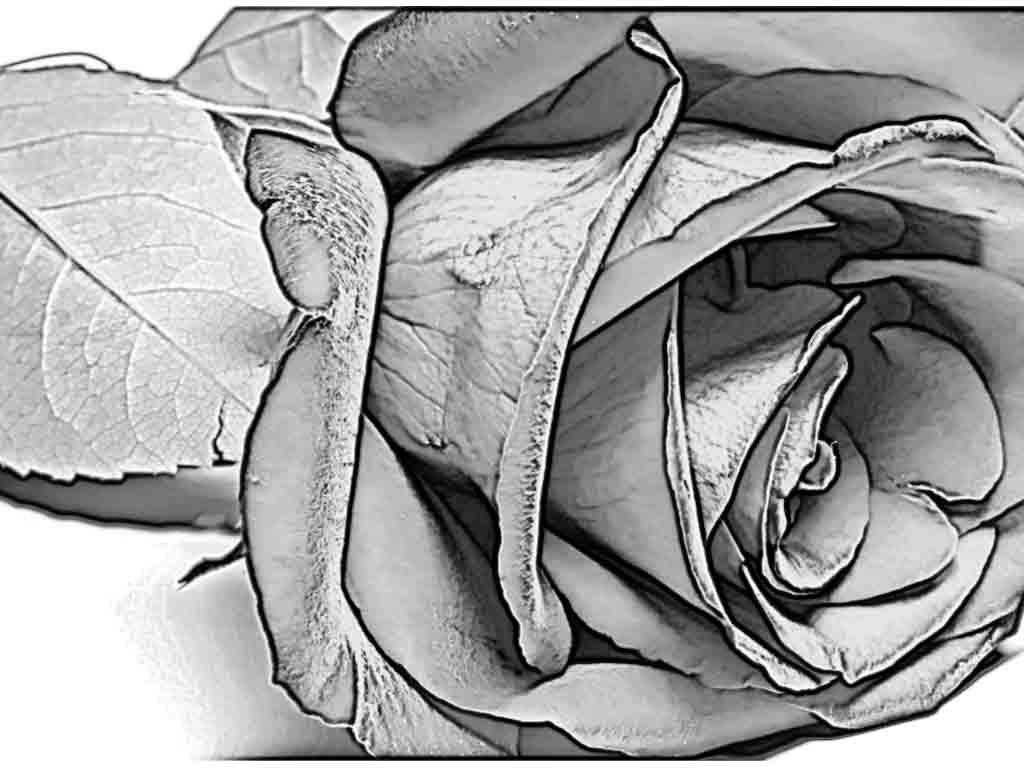 Pencil drawings Charcoal drawings and Art galleries: April ...