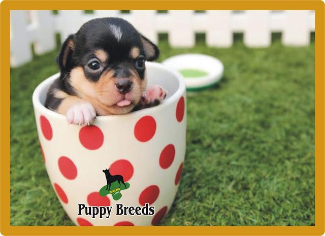 Puppy Breeds