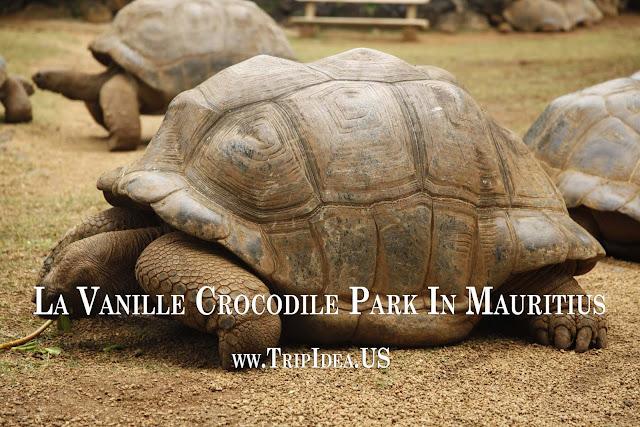 La Vanille Crocodile Park In Mauritius