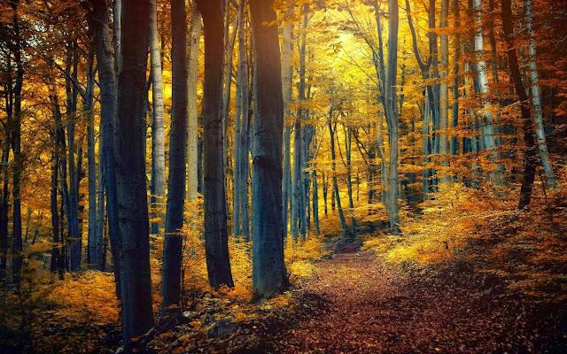 Foto met pad door het bos in de herfst