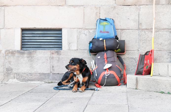 paisajes galicia santiago compostela perro