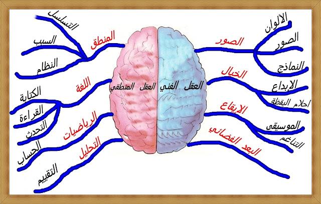 فعالية الدماغ..الادمغة الثلاثة