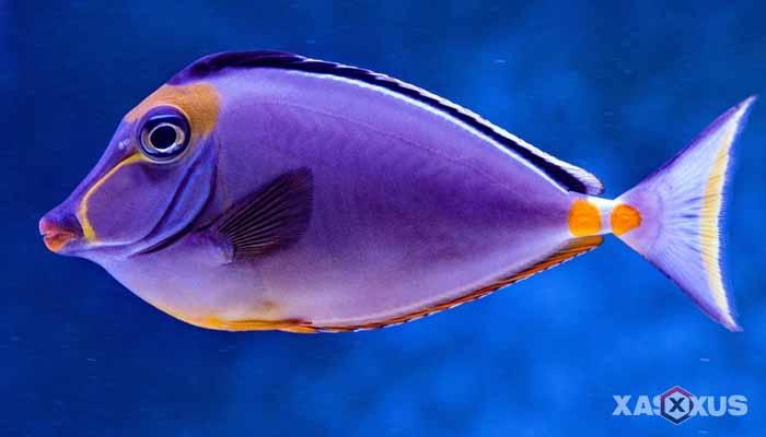 Hewan yang berkembang biak dengan cara bertelur - Ikan