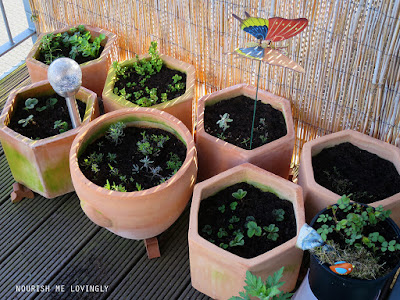 balcony_garden_March