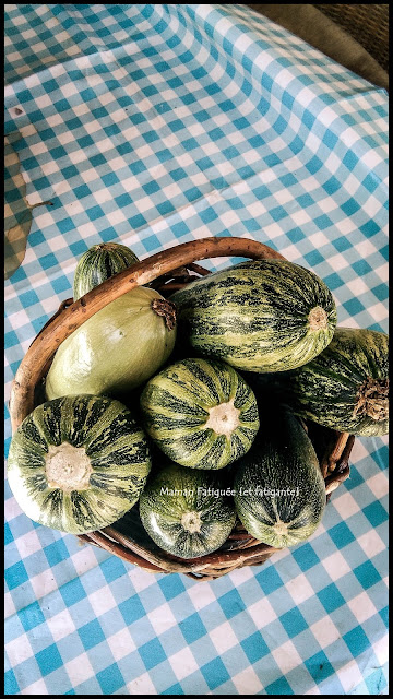 recolte courgettes