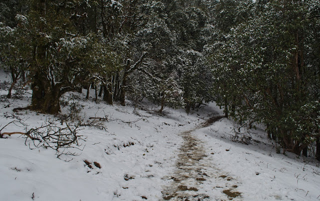 Trail of a snow trek
