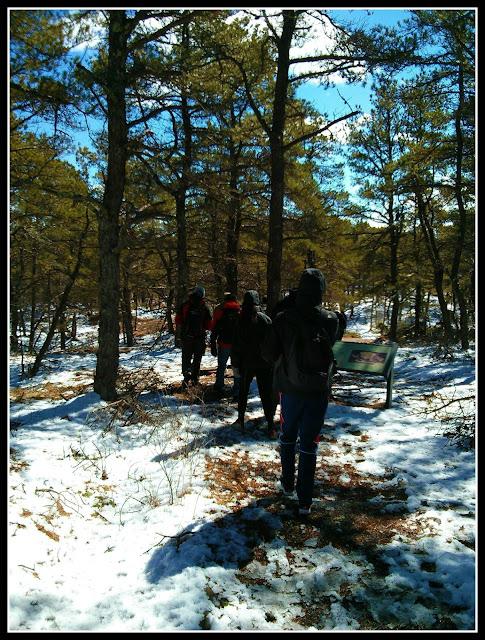 Great Island Trail: Zona de Pinos