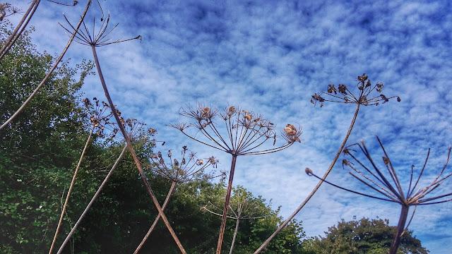 Project 366 2016 day 284 - Blue skies mornng run // 76sunflowers