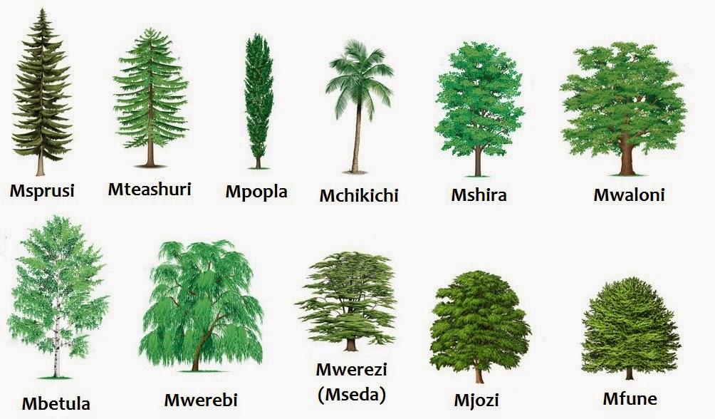 Swahili Land: Aina za Miti (Types of Trees)