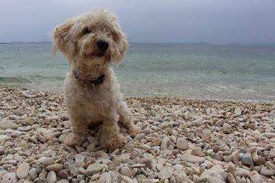 Ηγουμενίτσα: Βοηθήστε να βρεθεί στο σκυλάκι