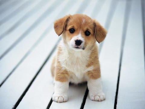 7 Bí Quyết Chụp Ảnh Đẹp Cho Cún Cưng