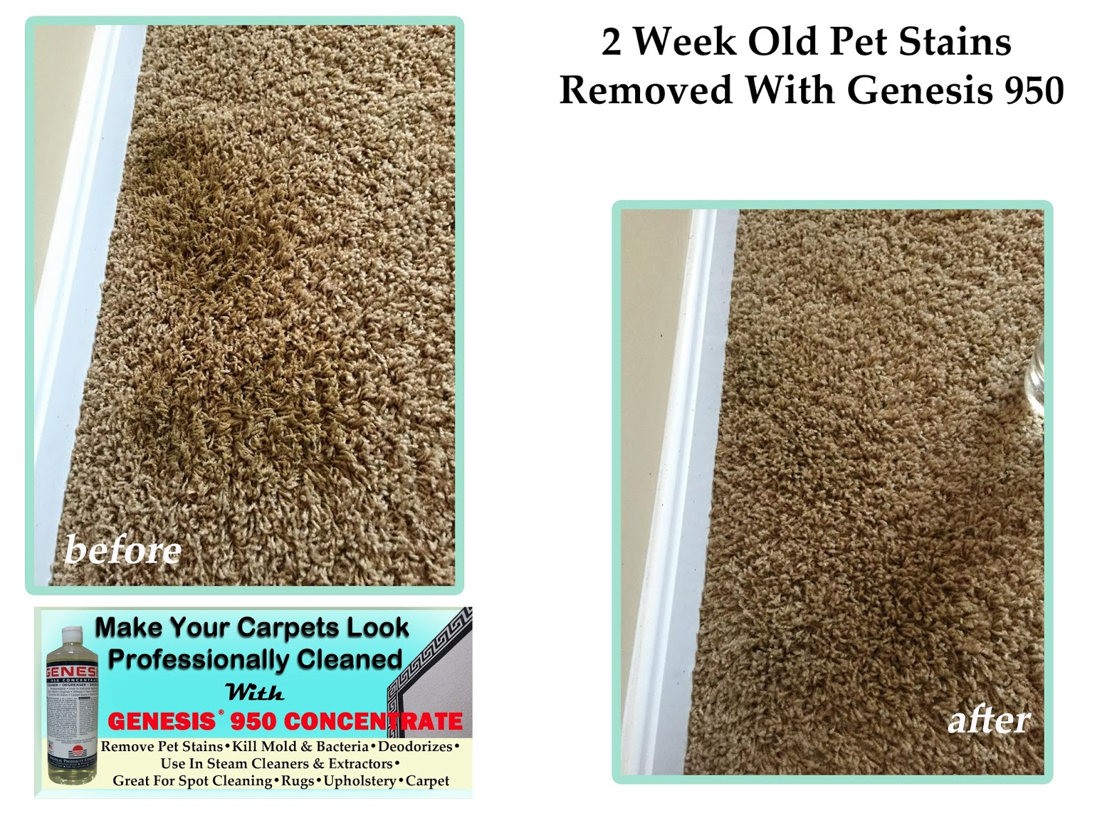 Best Pet Stain Remover For Pet Stains And Pet Odor: Best ...