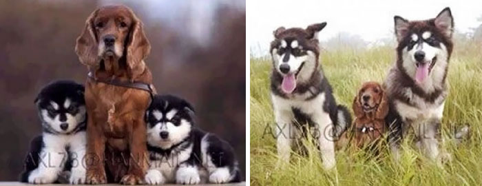 50 Heart-Warming Photos of Animals Growing Up Together - Find The Differences