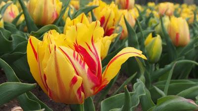 През април най-високите температури ще достигнат 25-30 градуса.