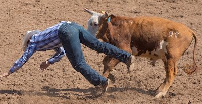 cowboy misses tackling the cow in Cave Creek