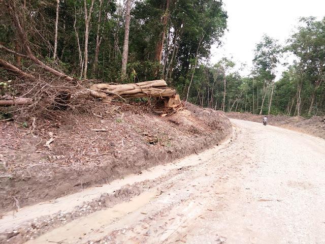 Bikin Jalan di Kawasan Hutan, Pemkab Muaro Jambi Akan Digugat