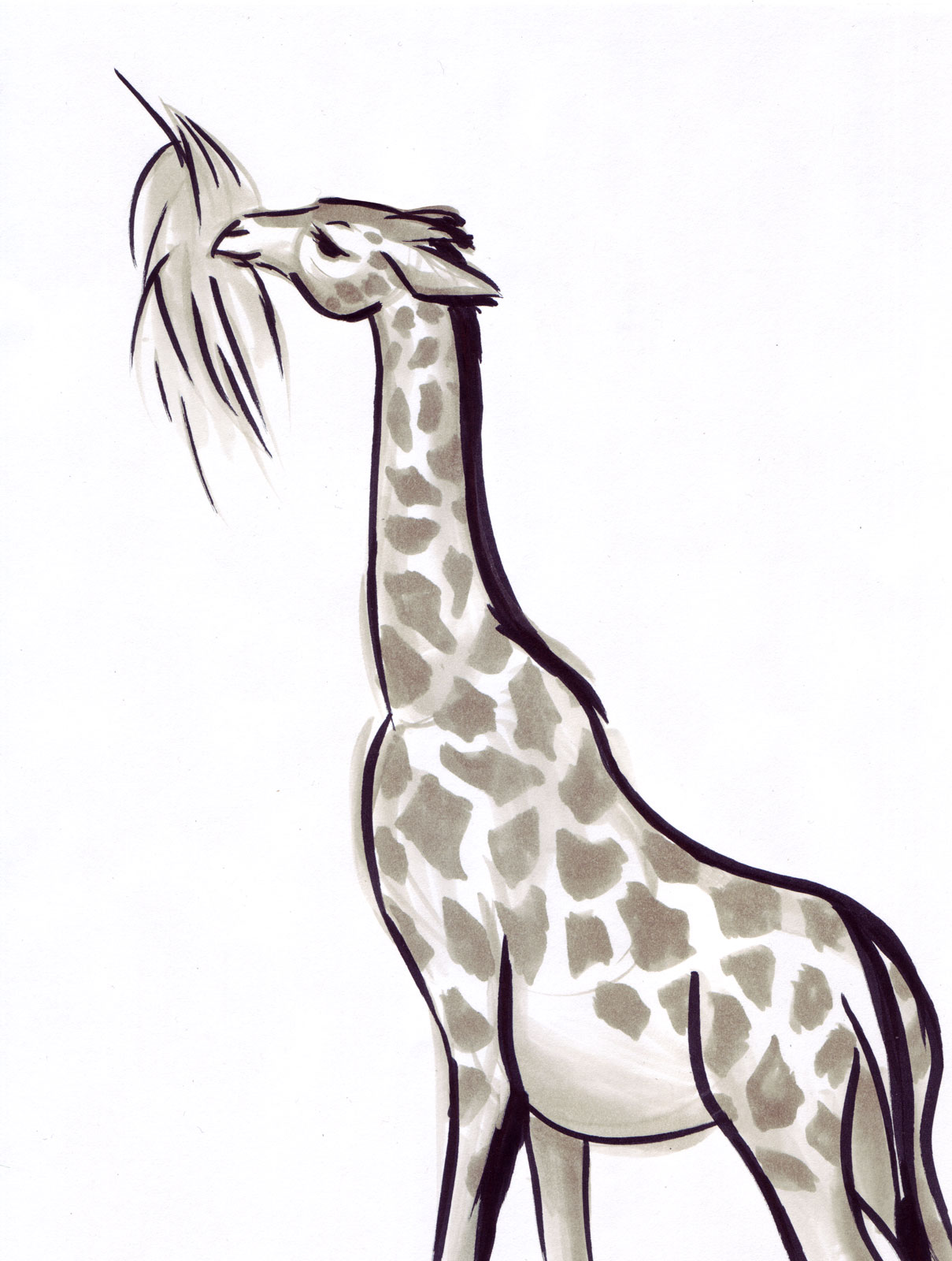Steftacular's Blog: Animal Gesture Drawings from the LA Zoo