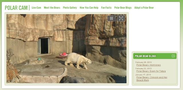 почему белый медведь не мерзнет