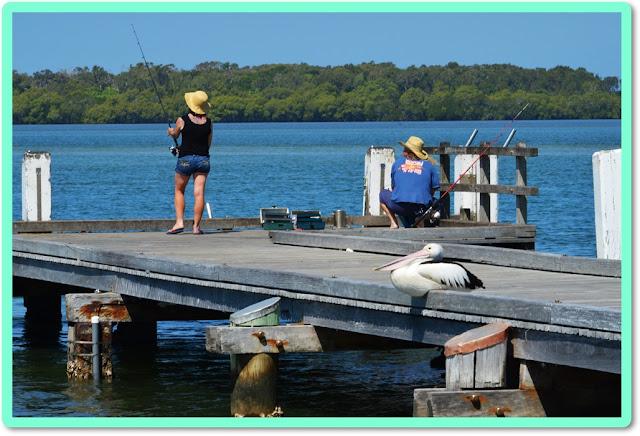 fiishing with pelicans