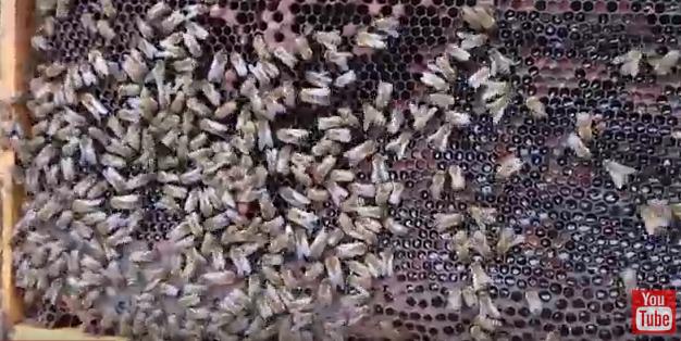 Eπιθεώρηση μελισσιών VIDEO