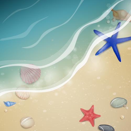 vector fondo playa con caracolas, piedras, conchas y estrellas de mar