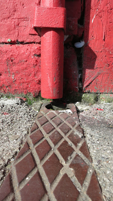 Red downpipe with leaf rising through drain.