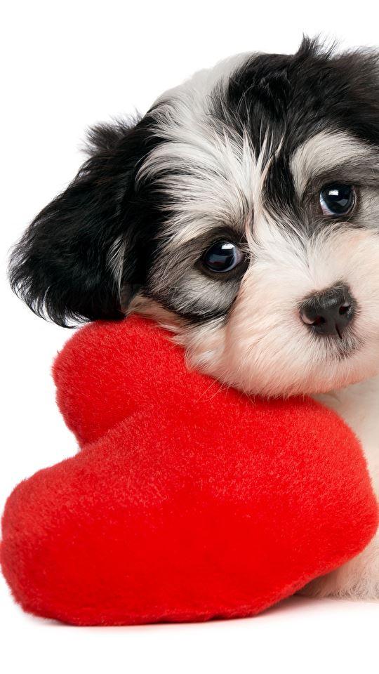 Cachorro Lindo com Coração 540x960 Papel de Parede