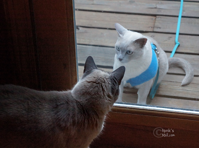 Faraday asks Maxie to LET HIM IN.