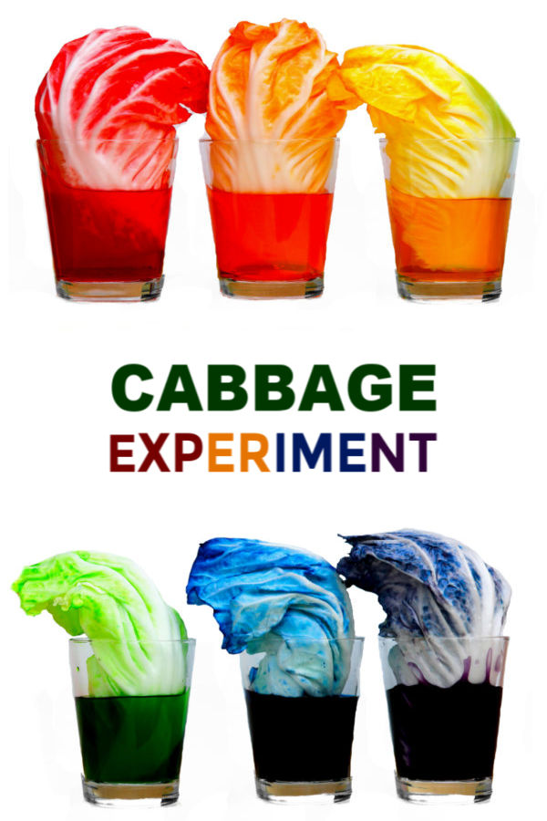 Teach kids about plants and how they thrive with this cabbage rainbow experiment for kids!  This activity requires few items, making it easy to create at home or at school.  Making a cabbage rainbow is great science fair project, too! #cabbageexperiment #cabbagesciencefairproject #cabbagescience #lettuceexperiment #scienceexperiments #scienceexperimentskids #scienceforkids #scienceprojects #sciencefairprojects #kidsscienceexperiments