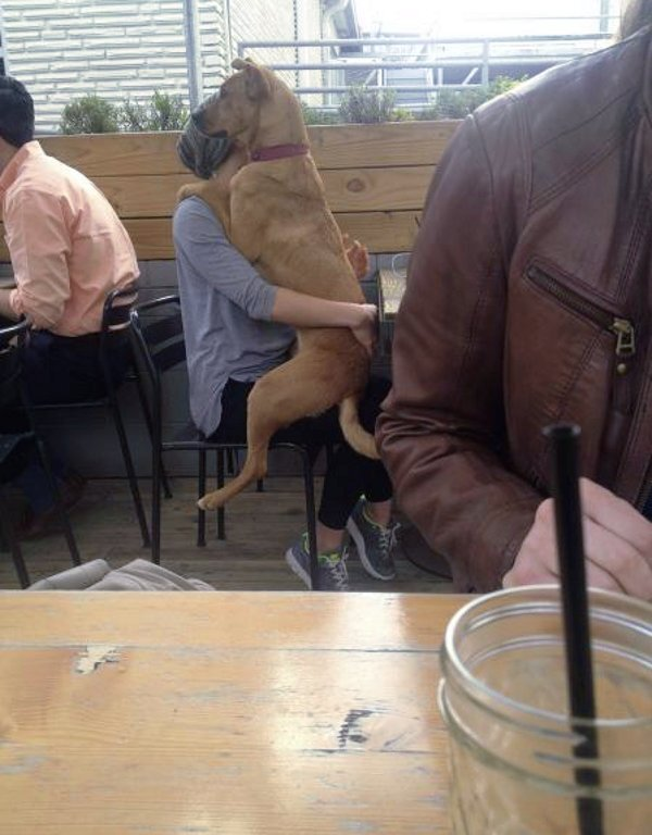 Cute dogs - part 236, cute dog picture, best funny dog picture