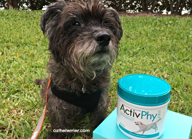 does your dog need activphy supplement?