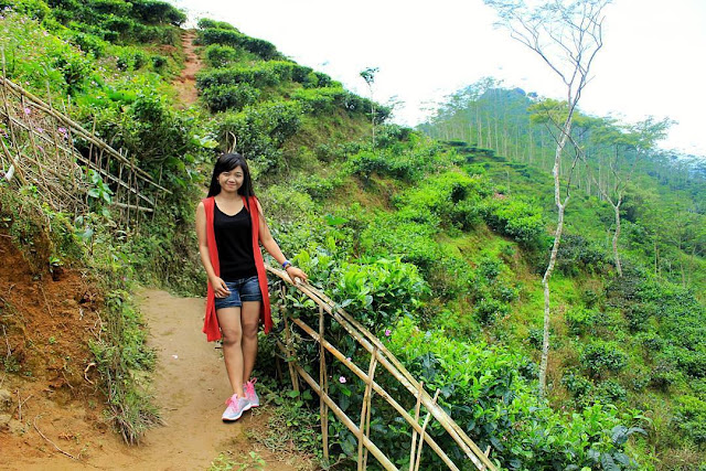 Tempat wisata Kebun Teh Nglinggo Kulonprogo Yogyakarta | paket wisata | harga tiket | alamat